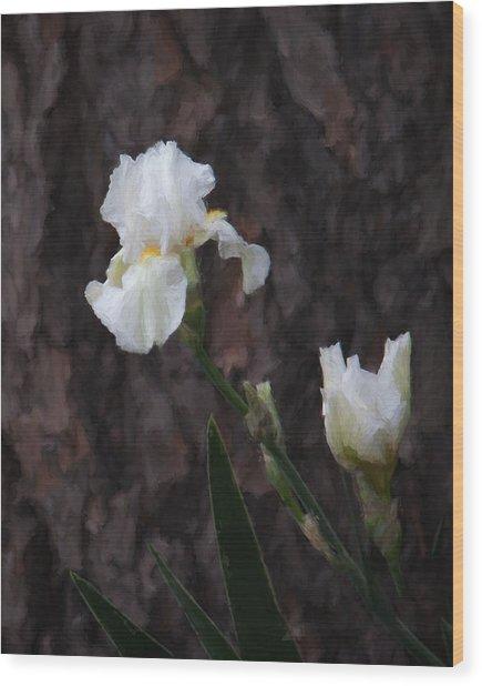 Snow White Iris On Pine Wood Print
