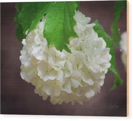 Snowball Bloom Wood Print