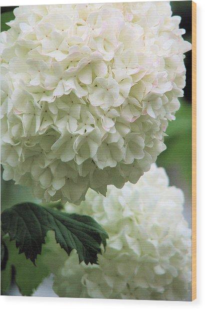 Snowball White Wood Print