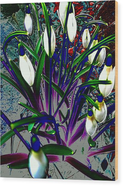 Snowdrops In Abstract  Wood Print