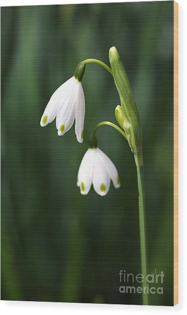 Snowdrops Painted Finger Nails Wood Print