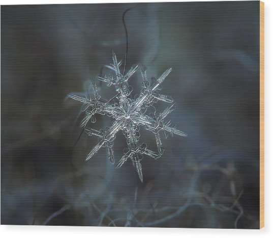 Snowflake Photo - Rigel Wood Print