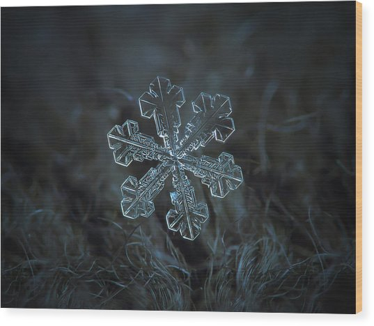 Snowflake Photo - Vega Wood Print