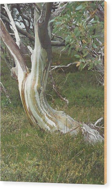 Snowgum Maiden Wood Print by Adrianne Wood