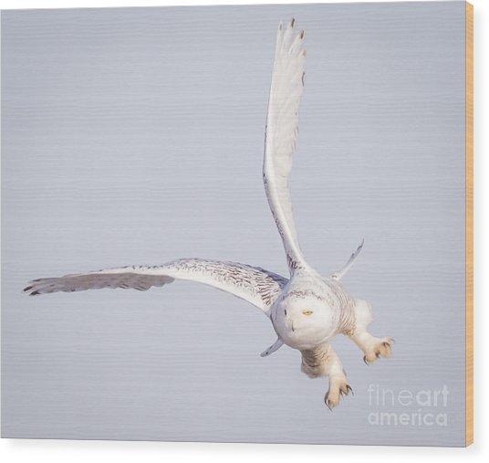 Snowy Owl Flying Dirty Wood Print