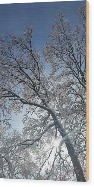 Snowshine Wood Print