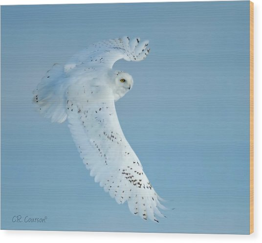 Snowy Against Blue Sky Wood Print