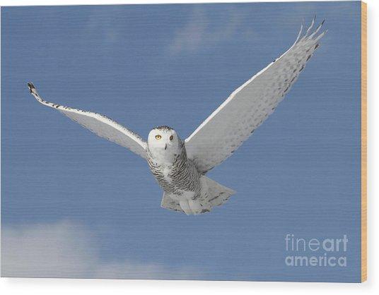 Snowy Angel Wood Print