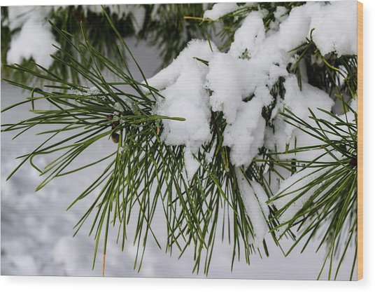 Snowy Branch Wood Print