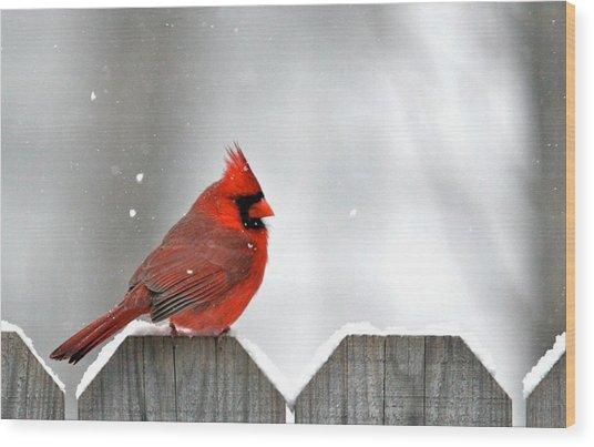 Snowy Cardinal Wood Print by Debbie Sikes