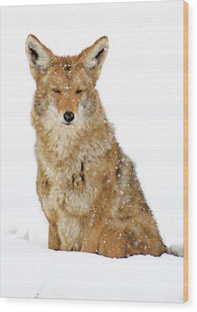 Snowy Coyote Wood Print