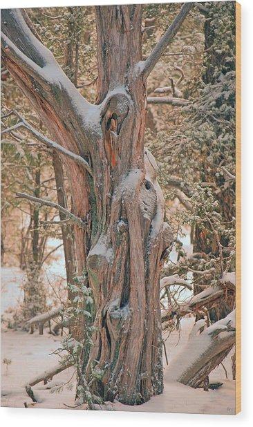 Snowy Dead Tree Wood Print