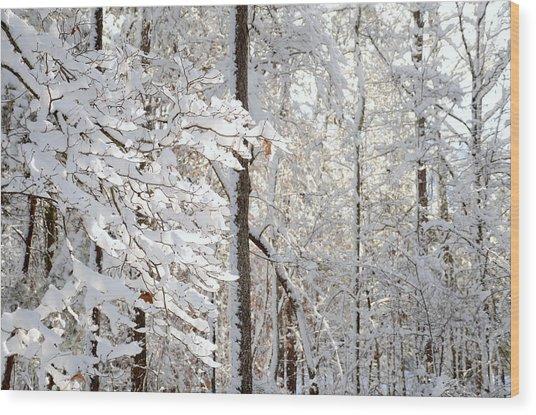 Snowy Dogwood Bloom Wood Print