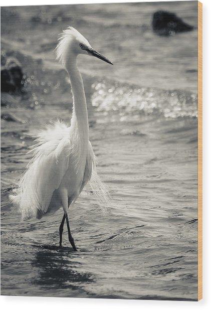 Snowy Egret At Lake Chapala Wood Print by Dane Strom