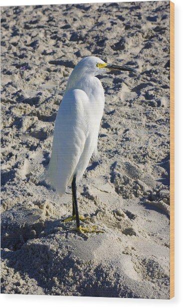 Snowy Egret At Naples, Fl Beach Wood Print