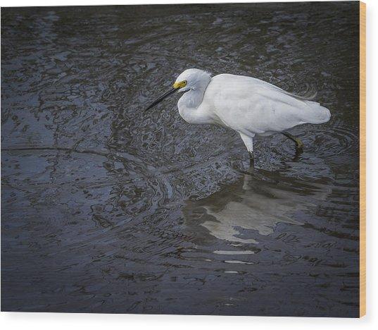 Snowy Egret Hunting Wood Print