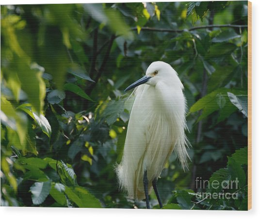 Snowy Egret In The Trees Wood Print