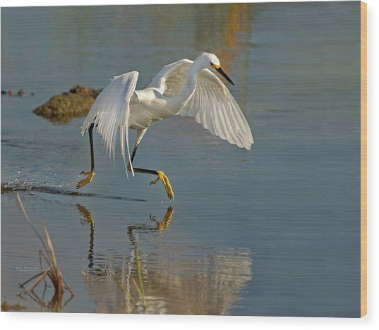 Snowy Egret On The Move Wood Print