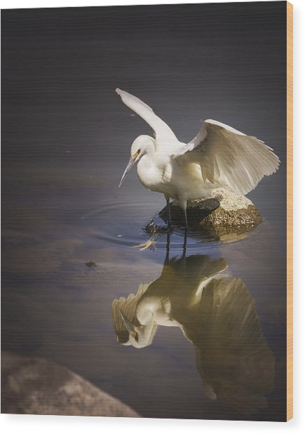 Snowy Egret Reflection Wood Print