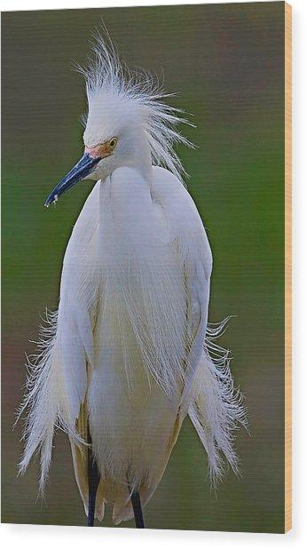 Snowy Egret Struts Wood Print