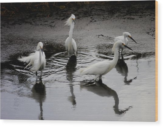 Snowy Egrets I Wood Print by Jane Melgaard