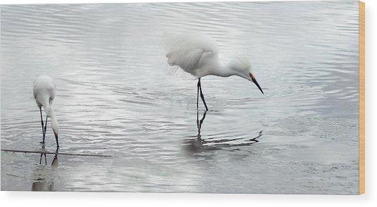 Snowy Egrets Wood Print