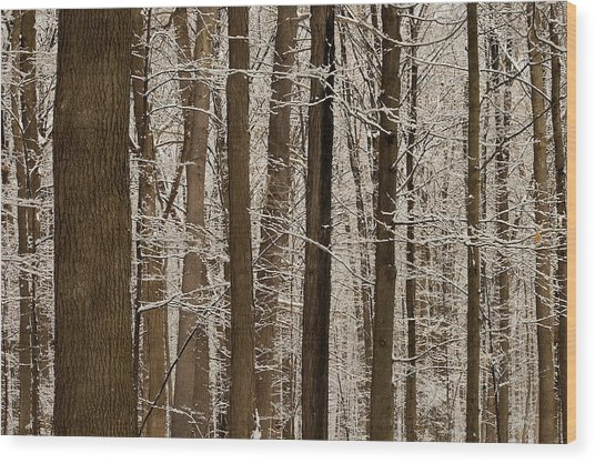 Snowy Forest Elevation Wood Print