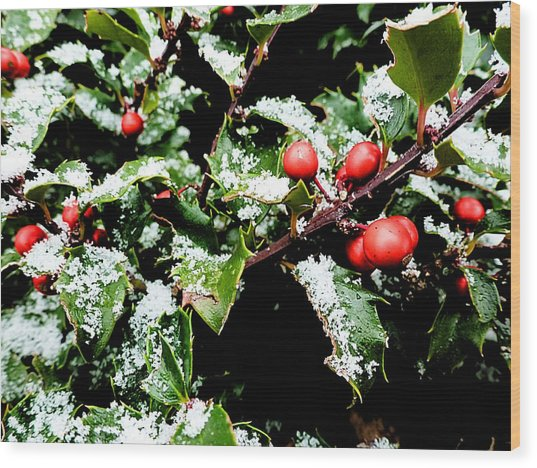 Snowy Holly Wood Print