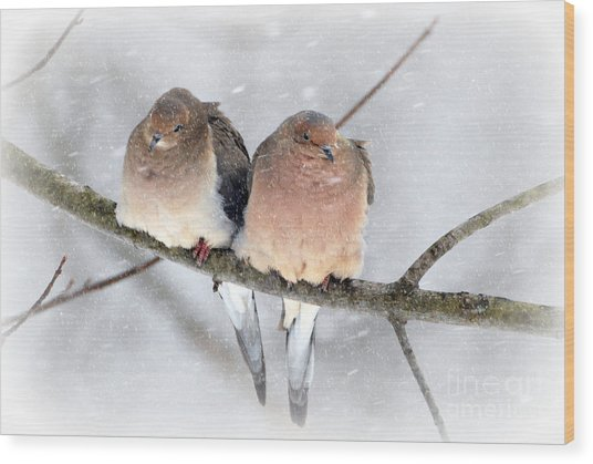 Snowy Mourning Dove Pair Wood Print