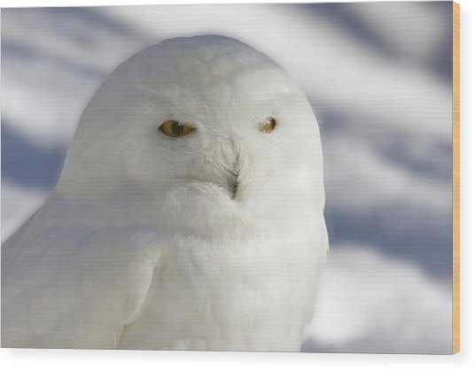 Snowy Owl - Harfang Des Neiges Wood Print