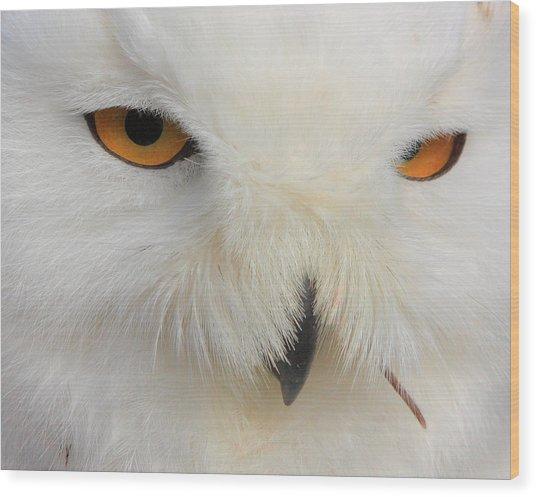 Snowy Owl Close Wood Print by Larry Federman
