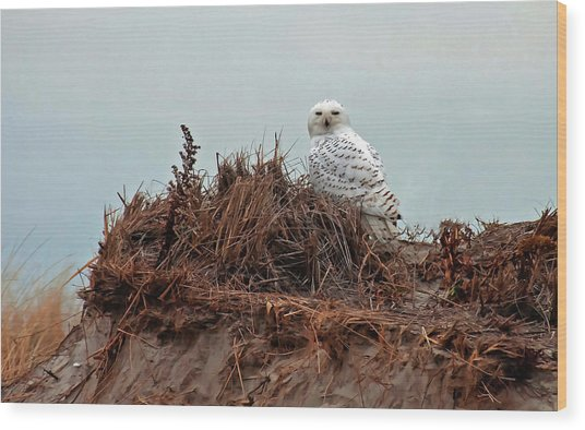 Snowy Owl In Dunes Wood Print