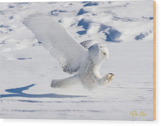 Wood Print featuring the photograph Snowy Owl Pouncing by Rikk Flohr