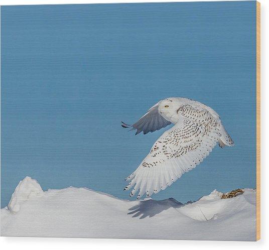 Snowy Owl - Taking Flighty Wood Print