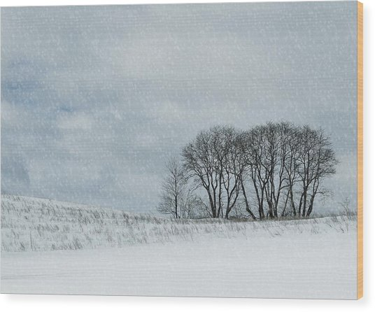 Snowy Pasture Wood Print by JAMART Photography