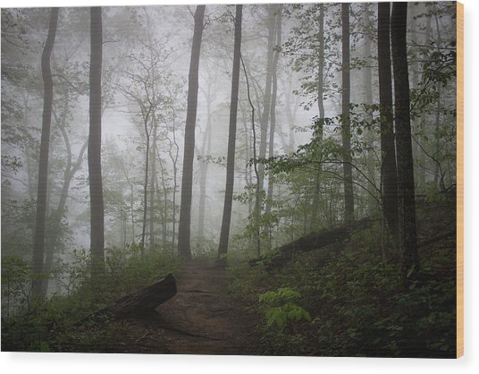 So Foggy Wood Print