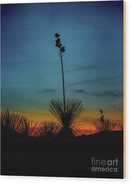 Soaptree Yucca At Sunset Wood Print