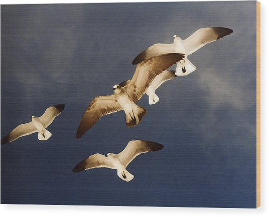 Soar Wood Print by Ginger Howland