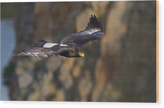 Soaring Black Eagle Wood Print by Basie Van Zyl
