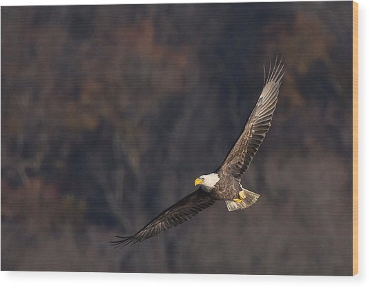 Wood Print featuring the photograph Soaring by Cindy Lark Hartman