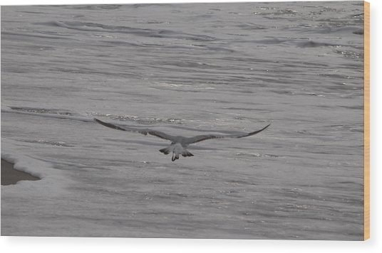 Soaring Gull Wood Print