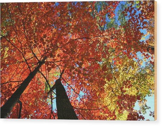 Soaring High Wood Print
