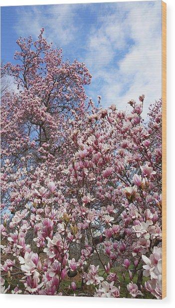 Soaring Magnolia Wood Print