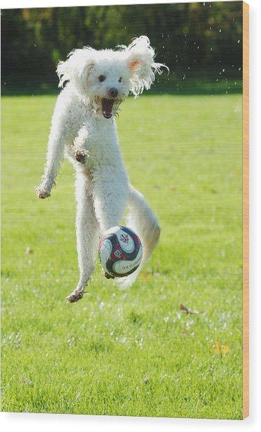 Soccer Dog-5 Wood Print