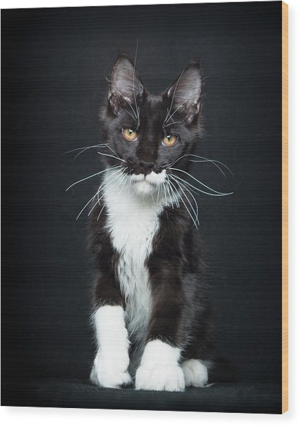 Wood Print featuring the photograph Socks by Robert Sijka