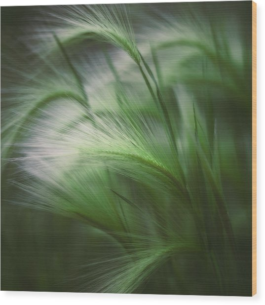 Soft Grass Wood Print