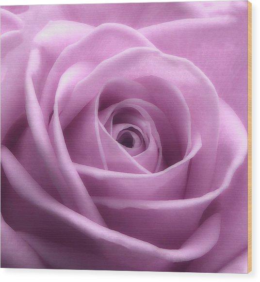 Soft Pink Beauty 3 Wood Print