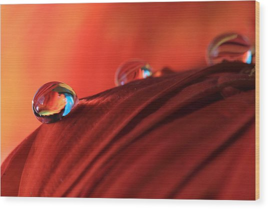 Soft Red Petals With Water Drops Wood Print