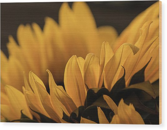 Soft Summer Light Wood Print
