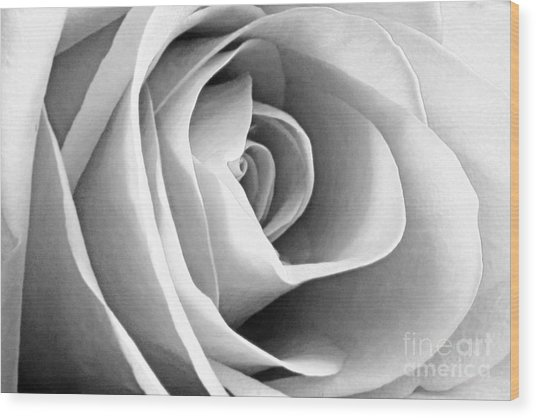 Softened Rose Wood Print